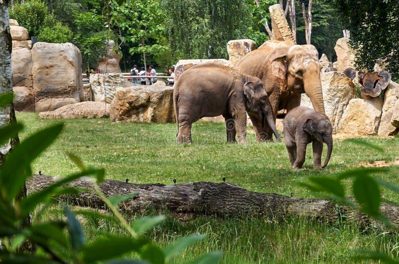 cesky τσεχική πόλης όψη δημοκρατιών krumlov μεσαιωνική παλαιά Πράγα Ζωολογικός κήπος της Πράγας Ελέφαντες 12 Ιουνίου 2016 στοκ εικόνες με δικαίωμα ελεύθερης χρήσης