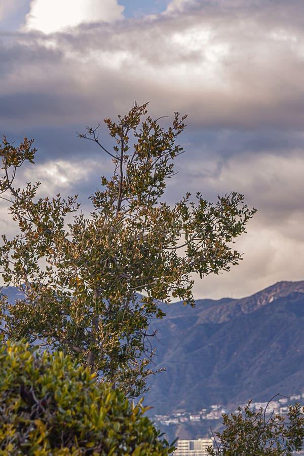 Cespugli che trascurano valle e le colline distanti con le case, cloudscape fotografie stock libere da diritti