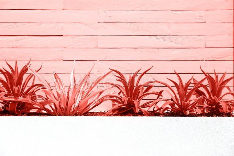 Cespugli con il fondo della parete nel colore di corallo d'avanguardia principale dell'anno 2019 fotografia stock