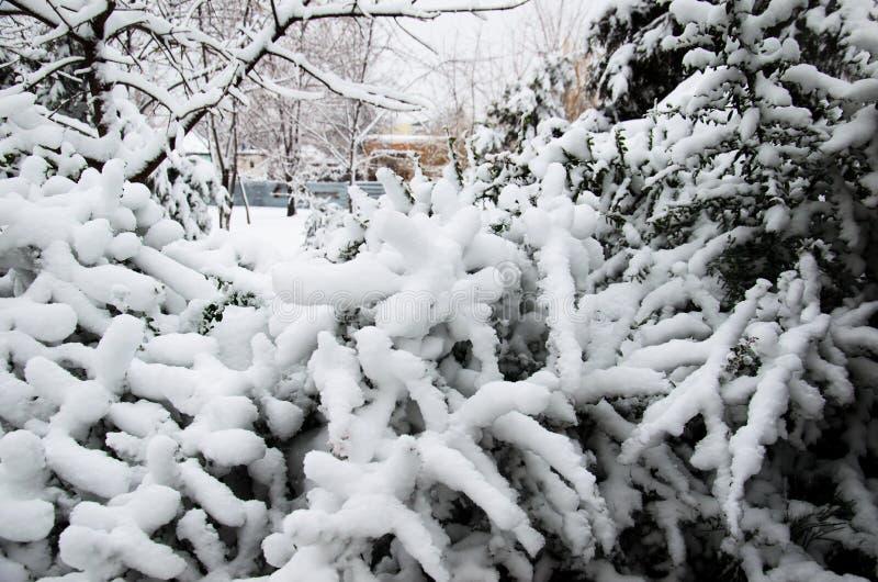 Cespugli coperti di neve in parco fotografie stock