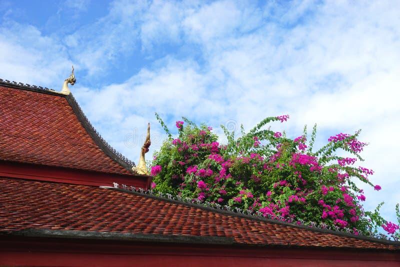 Cespugli di fioritura variopinti della buganvillea in cima ad un tetto di mattonelle ad un tempio buddista in Luang Prabang, Laos fotografie stock libere da diritti