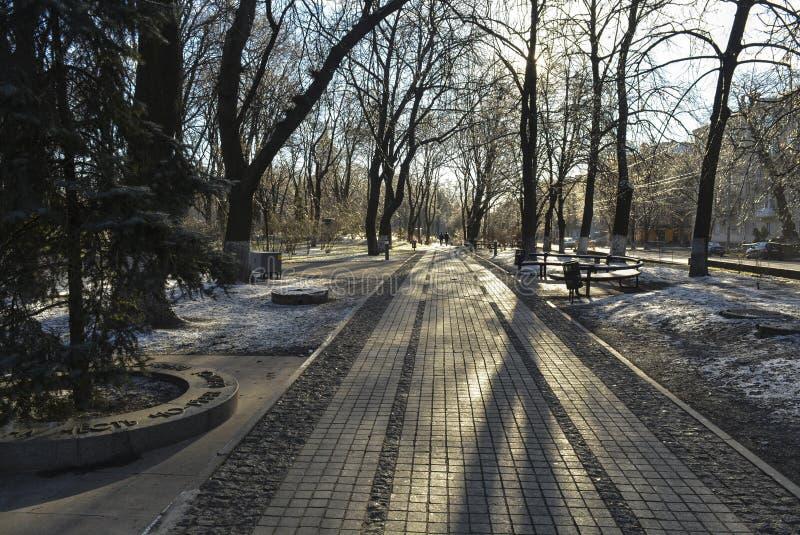 Cespugli di inverno fotografia stock libera da diritti