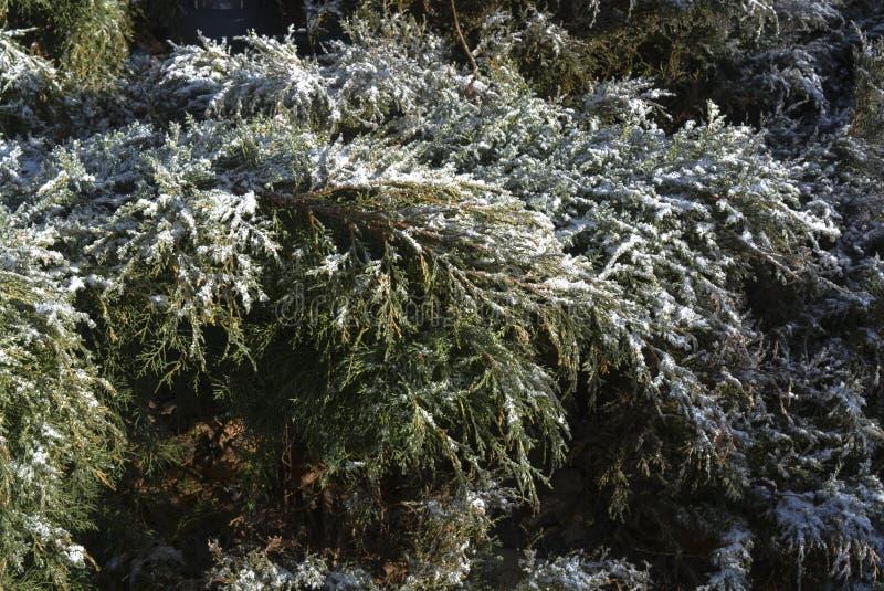 Cespugli di inverno immagini stock libere da diritti