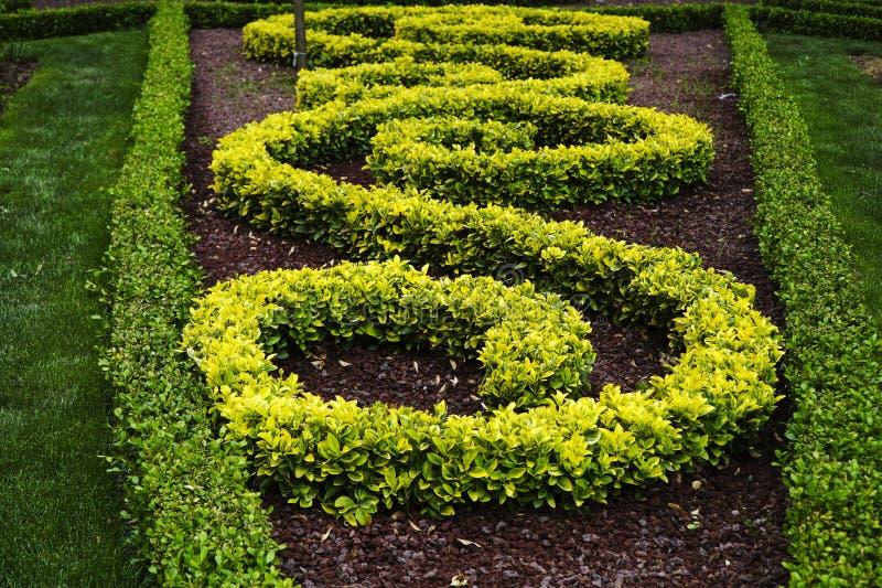 Cespugli ornamentali in un parco fotografia stock for Cespugli giardino