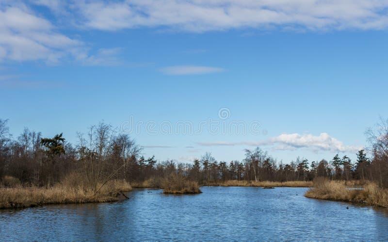 cespugli selvaggi che crescono dallo stagno in Columbia Britannica soleggiata del Canada di giorno di inverno immagine stock libera da diritti
