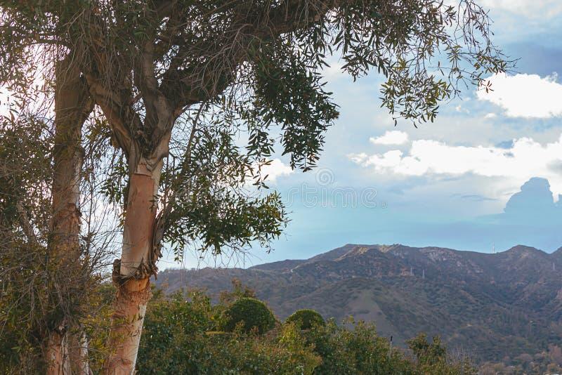 Cespugli, valle e catena montuosa di trascuratezza dell'albero di eucalyptus con cloudscape fotografia stock libera da diritti