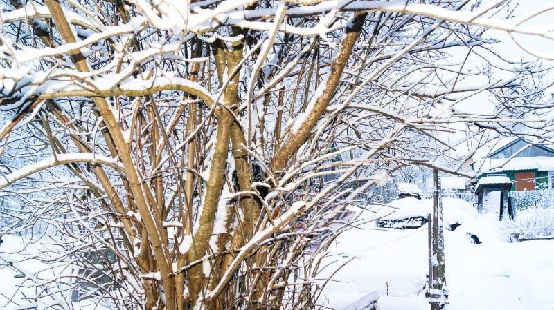 Cespuglio lilla sotto neve nell'inverno in una proprietà terriera rurale immagini stock libere da diritti