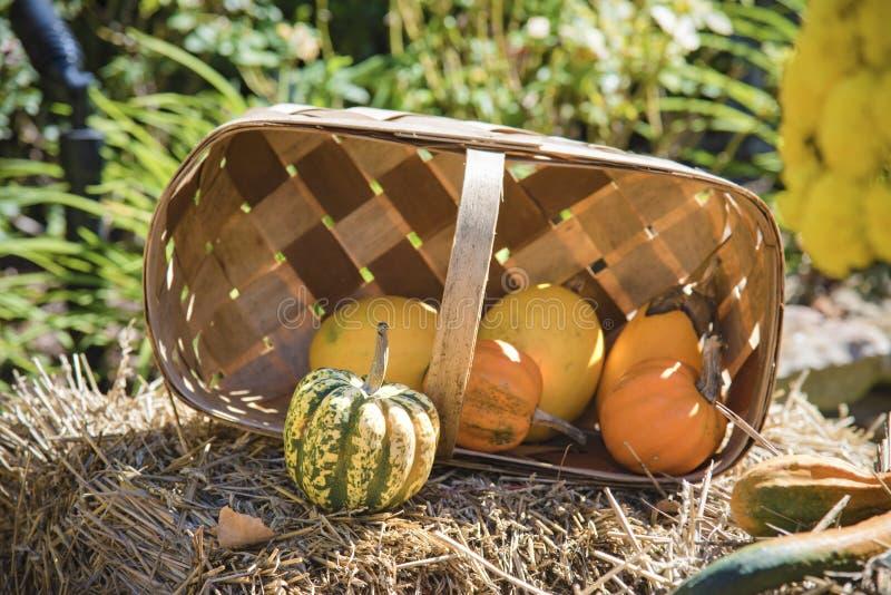 Cesta Autumn Fall Harvest Pumpkins Squash da ação de graças fotos de stock