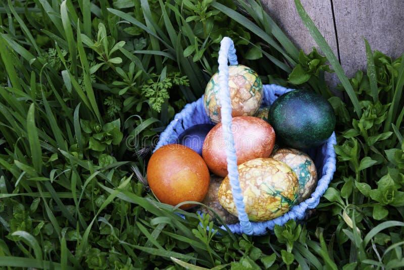 Cesta azul com os ovos da páscoa que estão em uma grama verde perto do coto fotos de stock royalty free