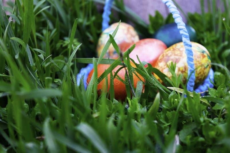 Cesta azul com os ovos da páscoa que estão em uma grama verde perto do coto foto de stock royalty free