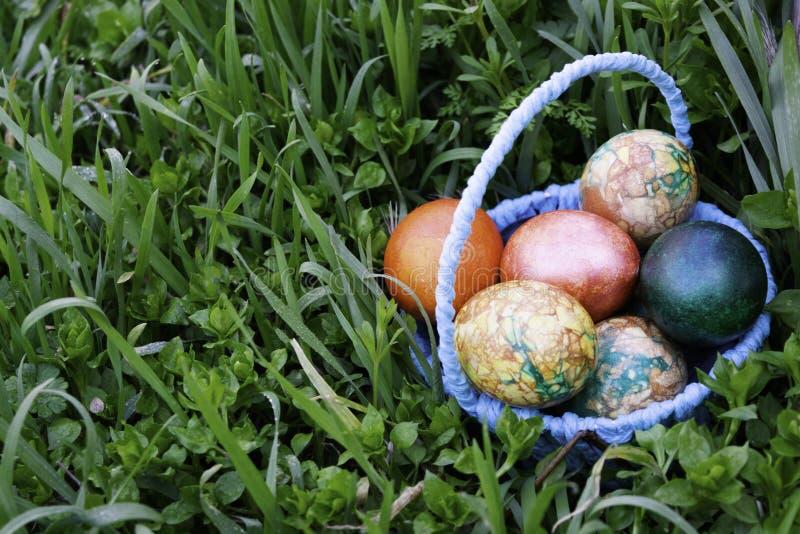 Cesta azul com os ovos da páscoa que estão em uma grama verde perto do coto imagens de stock royalty free