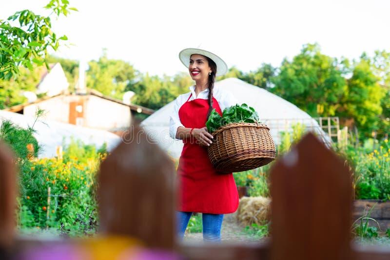 Cesta bonita da terra arrendada da jovem mulher com os legumes frescos no jardim foto de stock