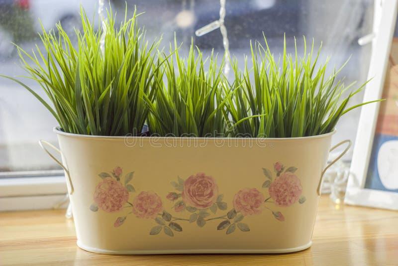 Cesta branca com grama verde-clara fresca em um fundo borrado da janela imagem de stock
