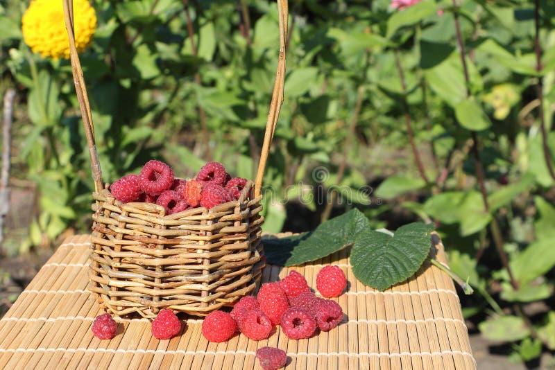 Cesta com as framboesas maduras frescas que estão em uma tabela foto de stock