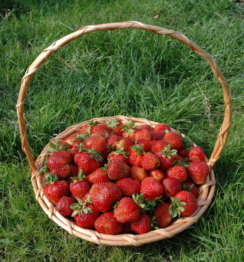 A cesta com bagas. fotografia de stock royalty free