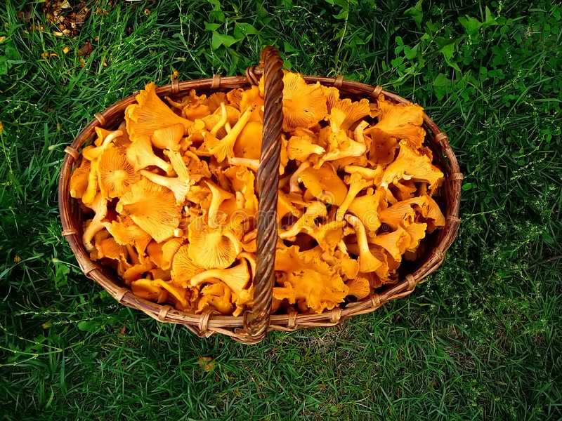 Cesta com cogumelos imagens de stock royalty free