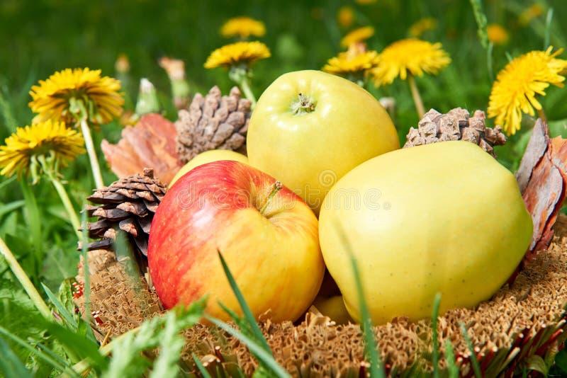 Cesta completa de maçãs frescas na grama imagem de stock royalty free