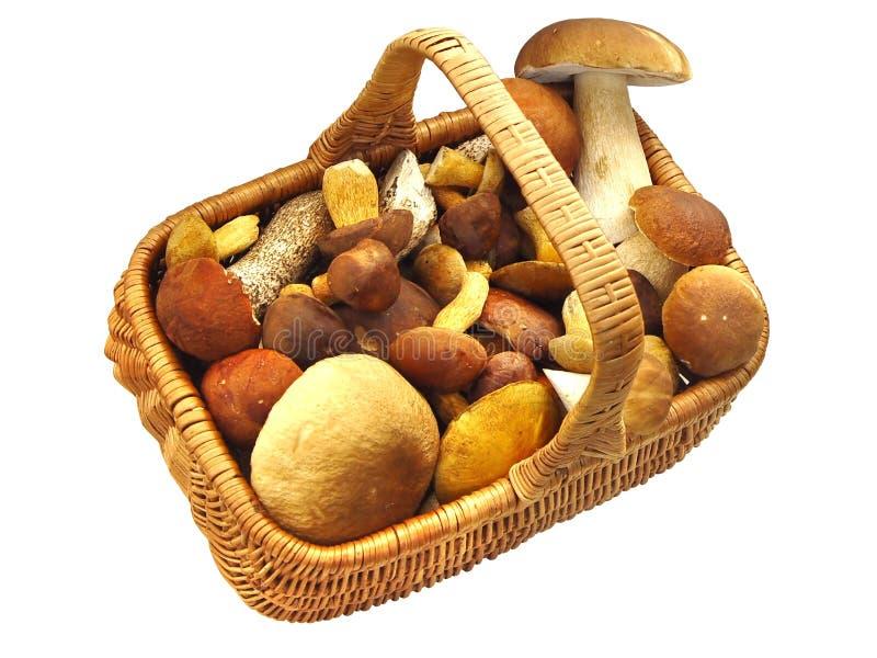 Cesta completamente dos cogumelos imagens de stock royalty free