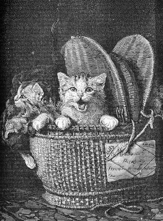 Cesta completamente dos gatinhos, animais de estimação para as crianças ilustração stock