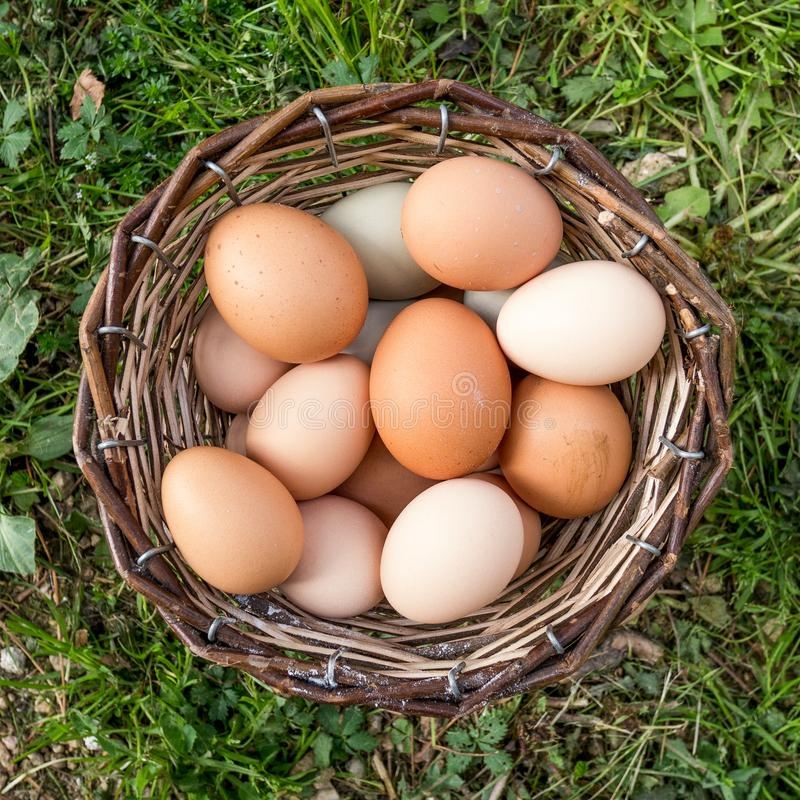 Cesta completamente dos ovos na grama Vista superior fotos de stock