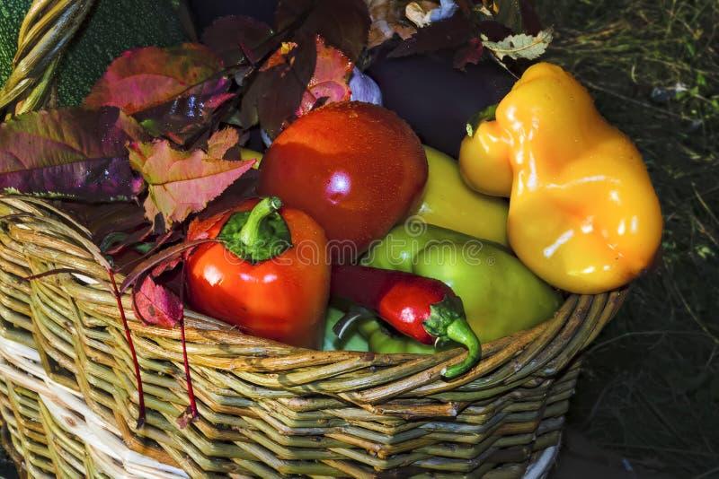 Cesta con el fondo de las verduras frescas de la naturaleza foto de archivo