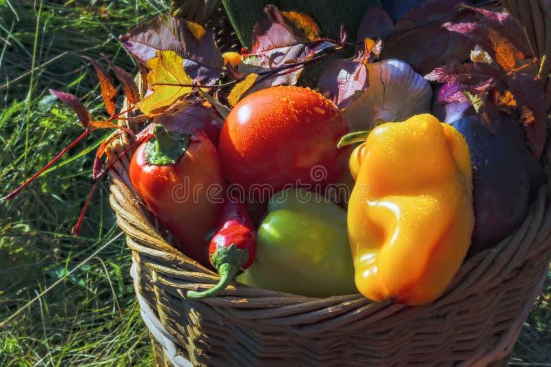 Cesta con el fondo de las verduras frescas de la naturaleza foto de archivo libre de regalías