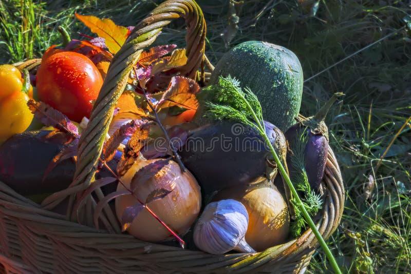 Cesta con el fondo de las verduras frescas de la naturaleza imagen de archivo libre de regalías