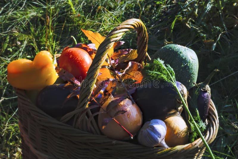 Cesta con el fondo de las verduras frescas de la naturaleza fotografía de archivo libre de regalías