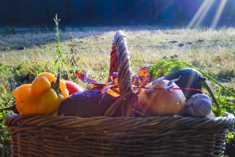 Cesta con el fondo de las verduras frescas de la naturaleza fotos de archivo