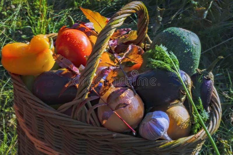Cesta con el fondo de las verduras frescas de la naturaleza imagenes de archivo