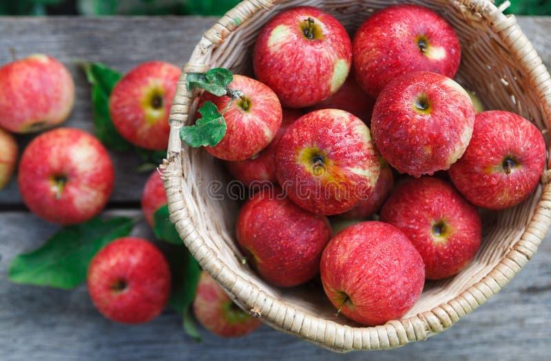 Cesta con el montón de la cosecha de la manzana en jardín de la caída imagen de archivo libre de regalías
