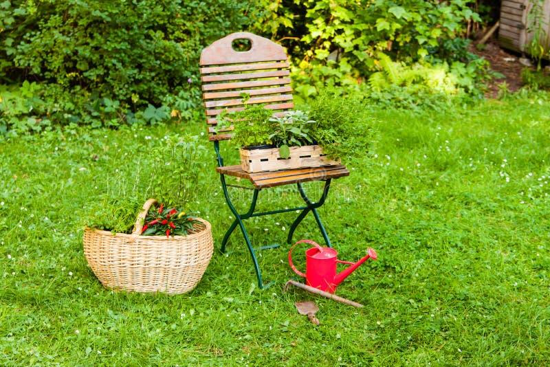 Cesta con las hierbas en un jardín fotos de archivo