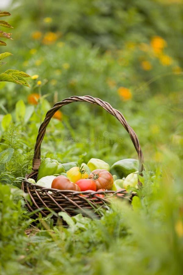 Cesta con las verduras orgánicas en la hierba verde Veh?culos reci?n cosechados Verduras crudas en cesta de mimbre imagenes de archivo