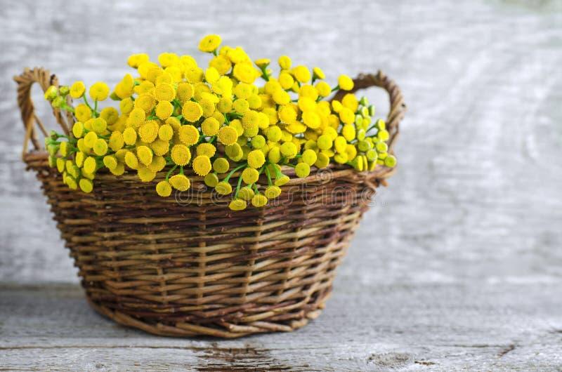 Cesta con un ramo de flores del tansy fotos de archivo libres de regalías