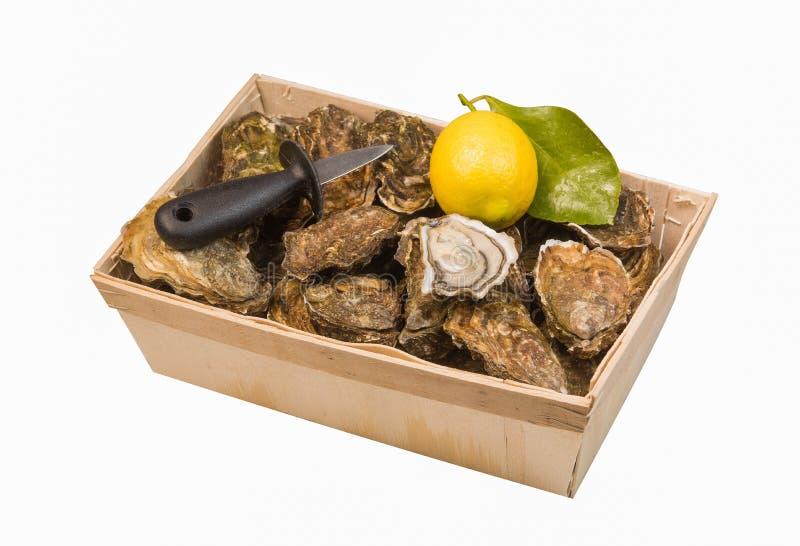 Cesta crua das ostras com o limão no fundo branco imagem de stock