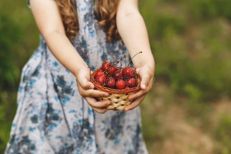 Cesta das cerejas nas mãos de uma criança fotos de stock