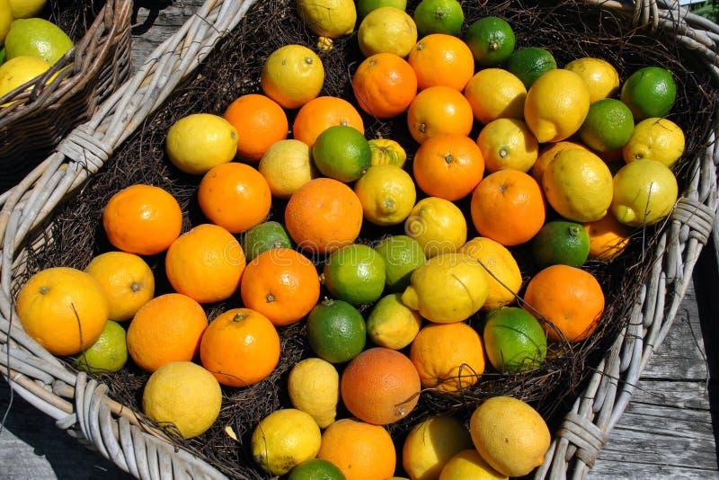 Cesta das citrinas fotografia de stock