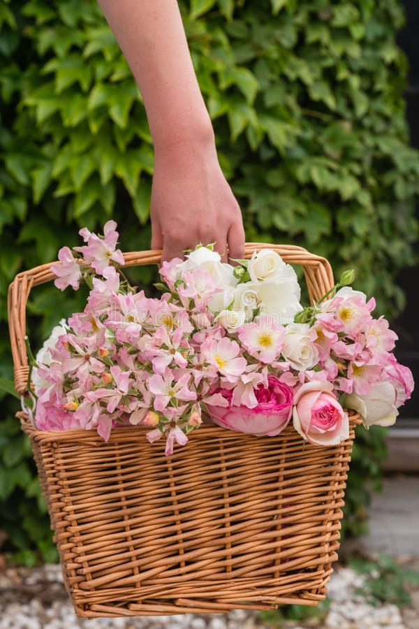 Cesta das rosas foto de stock royalty free