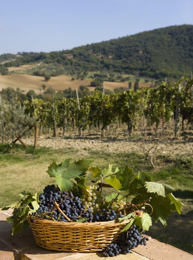 Cesta das uvas imagens de stock