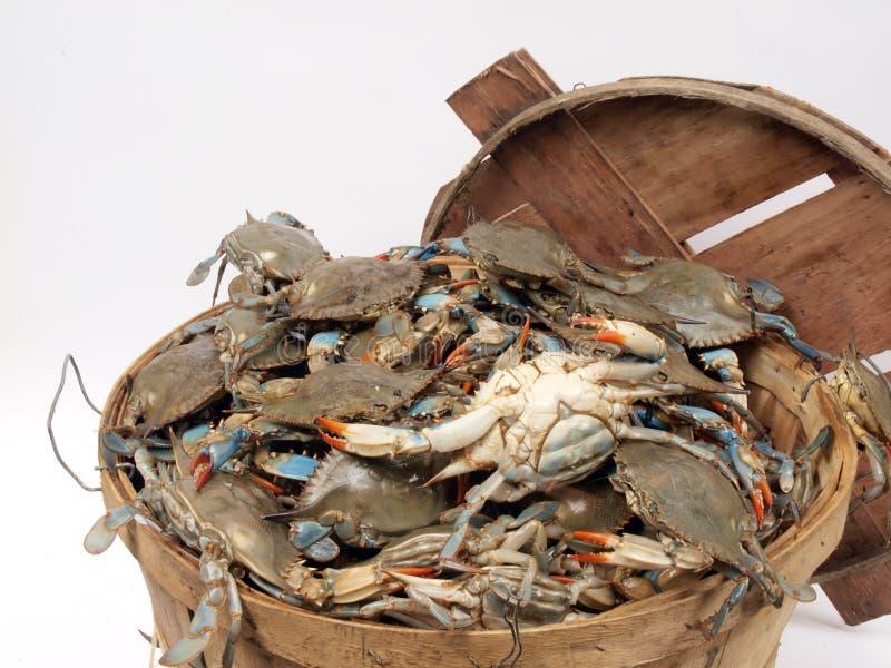 Cesta de alqueire de crabs2 foto de stock