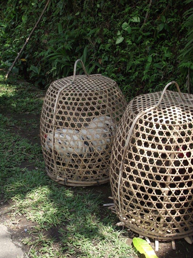 Cesta de bambu tradicional para transportar a galinha viva em Bali imagens de stock