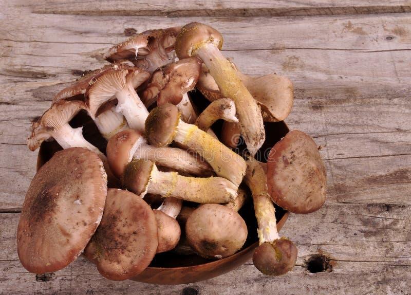 Cesta de Forest Edible Mushrooms In Wicker na parte superior velha da placa de madeira imagens de stock