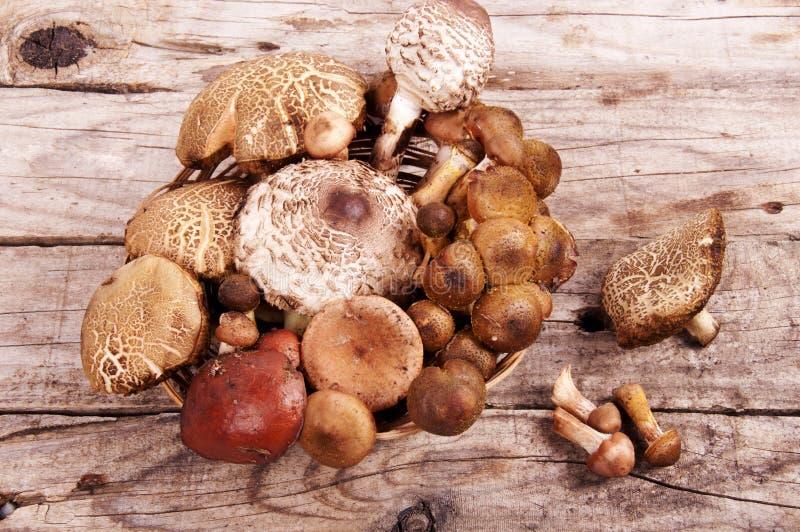 Cesta de Forest Edible Mushrooms In Wicker na parte superior velha da placa de madeira foto de stock