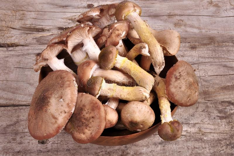 Cesta de Forest Edible Mushrooms In Wicker na parte superior velha da placa de madeira imagens de stock royalty free