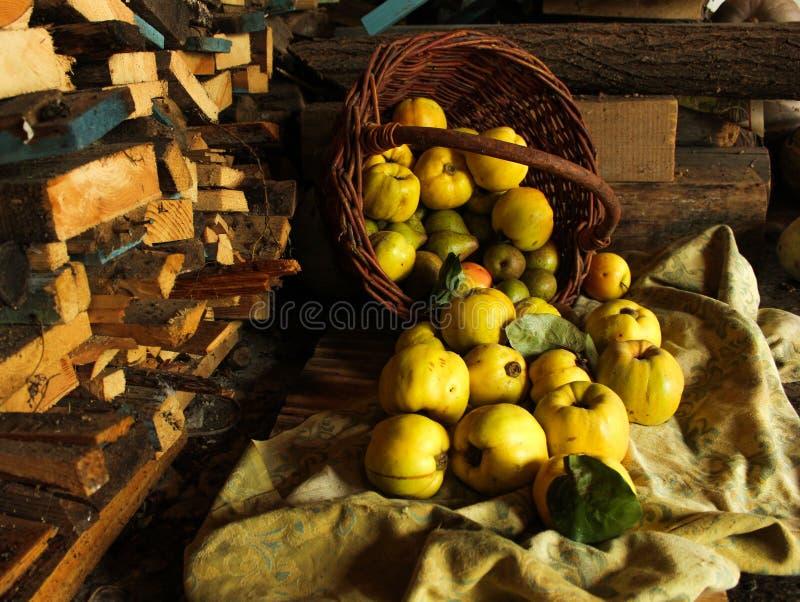 Cesta de fruta de manzanas del membrillo de las peras en un fondo de la madera fotos de archivo