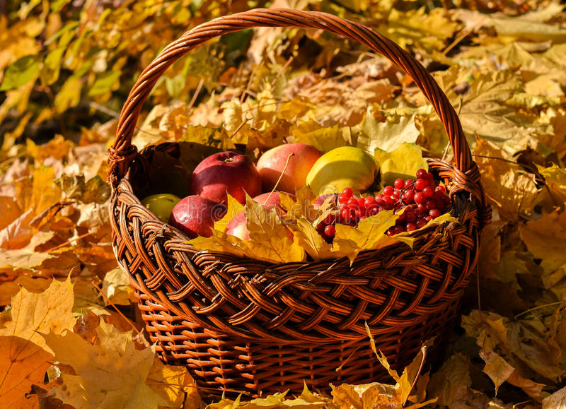 Cesta de fruta en la caída foto de archivo libre de regalías
