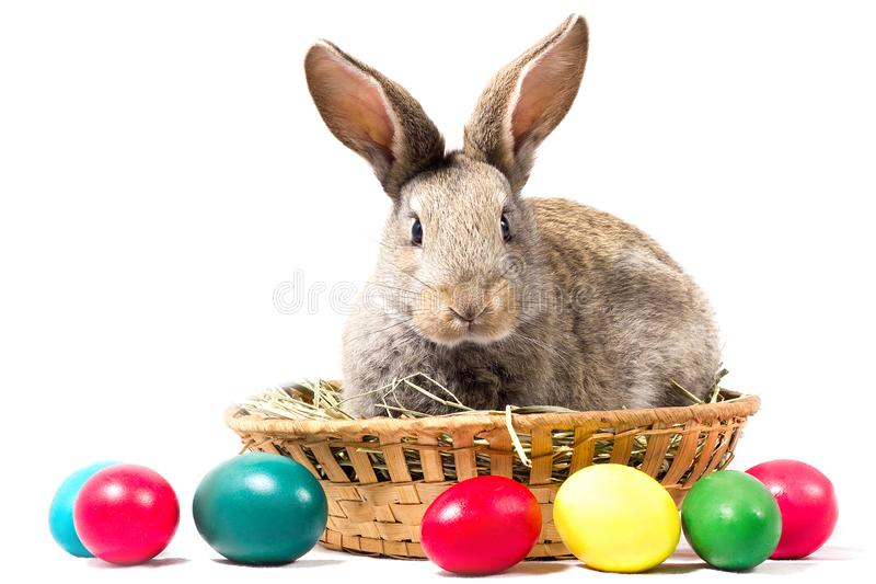 Cesta de Gray Easter Bunny Sits In A, isolado, placa para o feriado da Páscoa imagem de stock royalty free