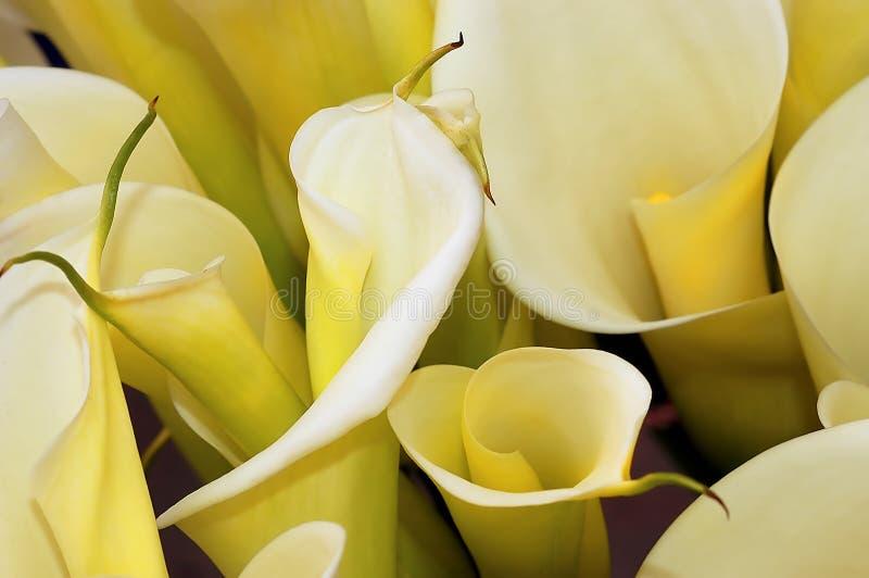 Cesta de Lillies imagen de archivo libre de regalías