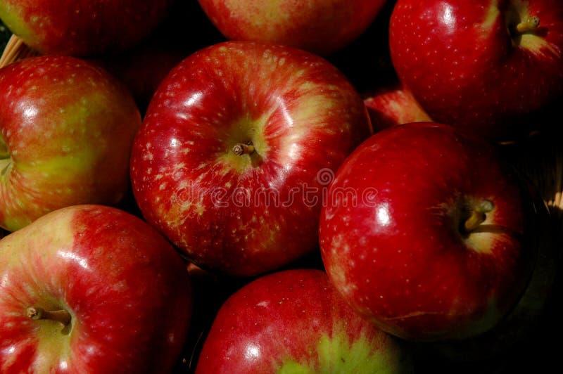 Cesta de manzanas foto de archivo libre de regalías