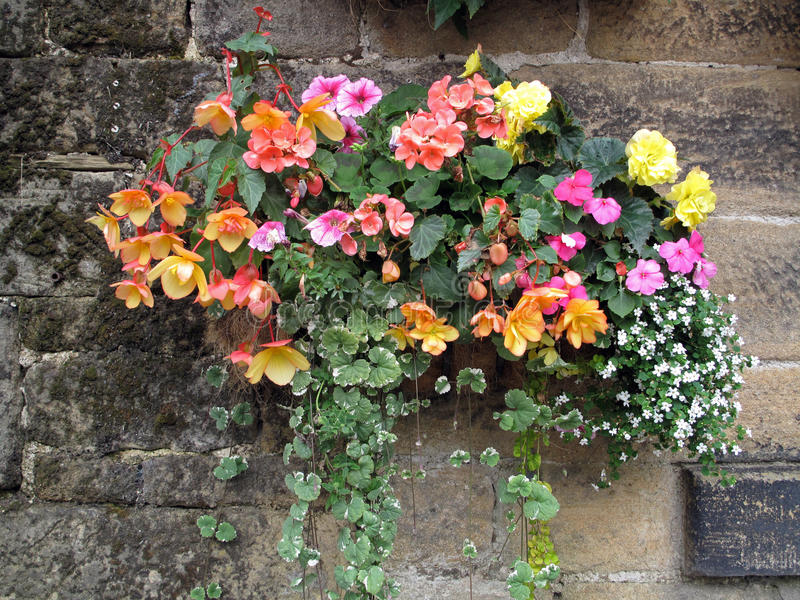 Cesta de suspensão Agaist da flor uma parede de pedra imagem de stock royalty free